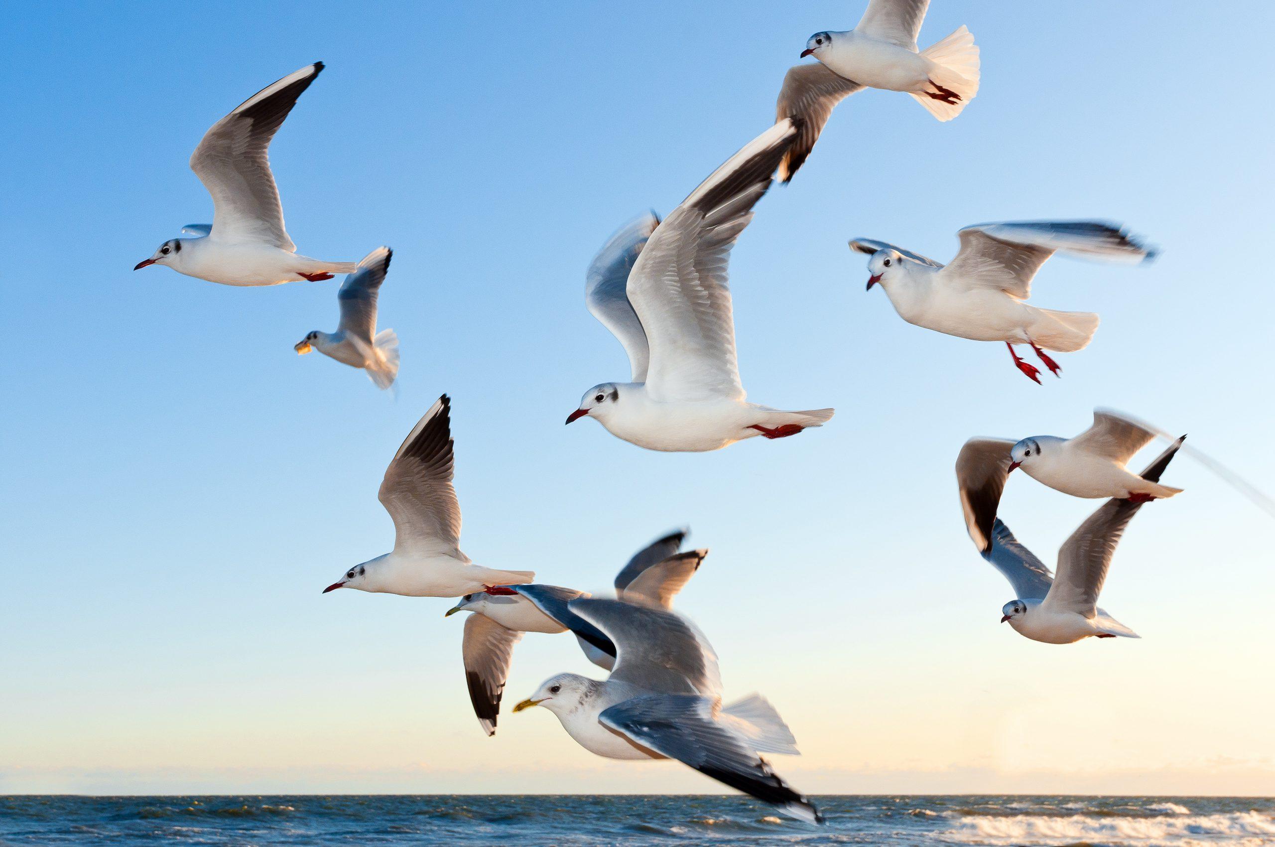 Hochseeangeln Hirtshals Dänemark Gelbes Riff Möwen